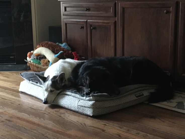 Vegas and Max - Dog Bed
